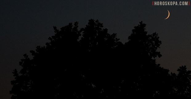 luna-durvo